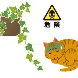 ペットに害のある観葉植物に注意!サムネイル
