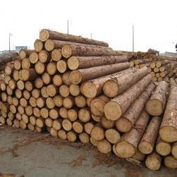 木材市場に制限サムネイル