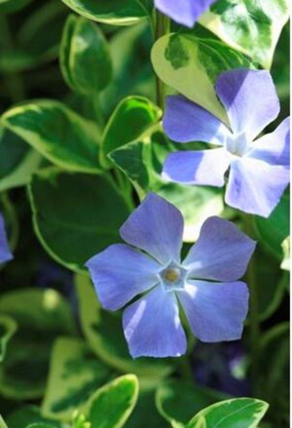 名も知らない綺麗な花サムネイル
